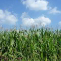 Investigaciones agropecuarias, un enfoque medioambiental