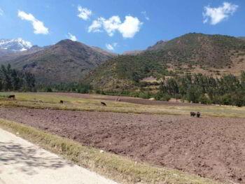 Agricultura sostenible y socialmente justa en el Perú