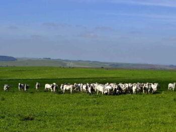 A importância da análise de gestão na agropecuária: controle de custos e aumento da rentabilidade