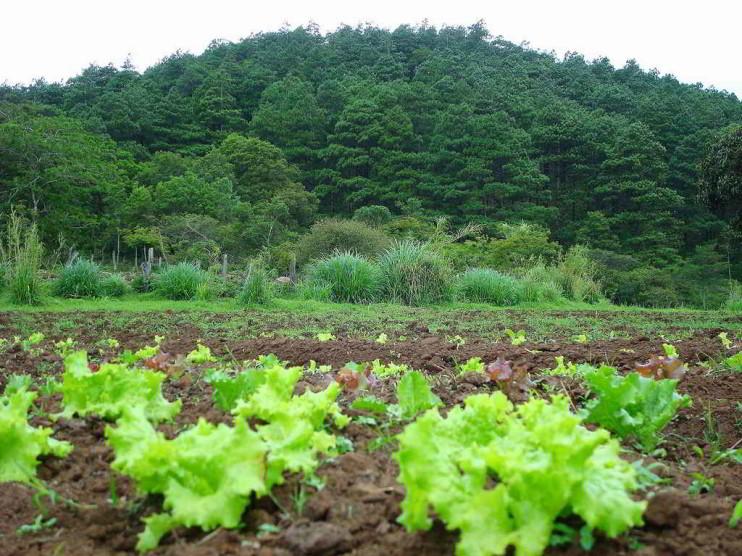 Comparación de costos de asistencia técnica agropecuaria en Nicaragua