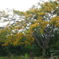 Plan de manejo y uso de la tierra PLUT en un parque natural
