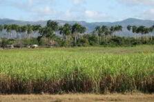 Seis sigma aplicada al cultivo de la caña de azúcar.