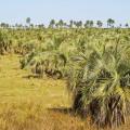 Bioenergía y Agricultura