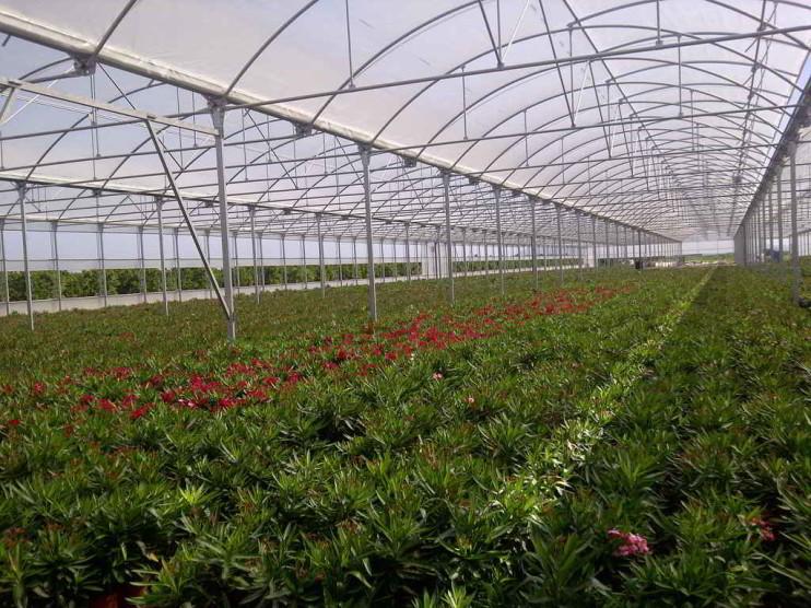 Fortalecimiento de cultivos bajo ambiente controlado. Municipio de Constanza República Dominicana
