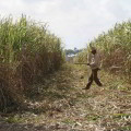 Gestión de proyectos en empresas cubanas del sector agrícola