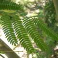 El medio ambiente y los conocimientos elaborados por otras ramas del saber