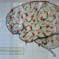Neuroeconomía y teoría de juegos