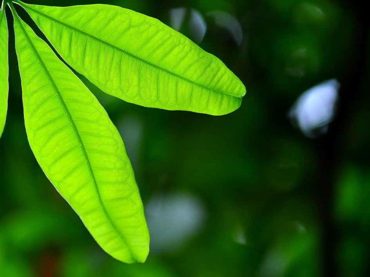 Fomento de la ética ambiental
