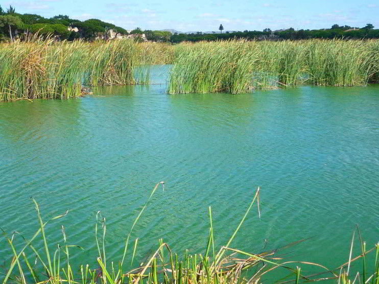 Modelo de compensación ambiental para un parque natural en República Dominicana