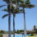 Sistema de gestión medioambiental del Hotel NH Kristal Laguna Cayo Coco