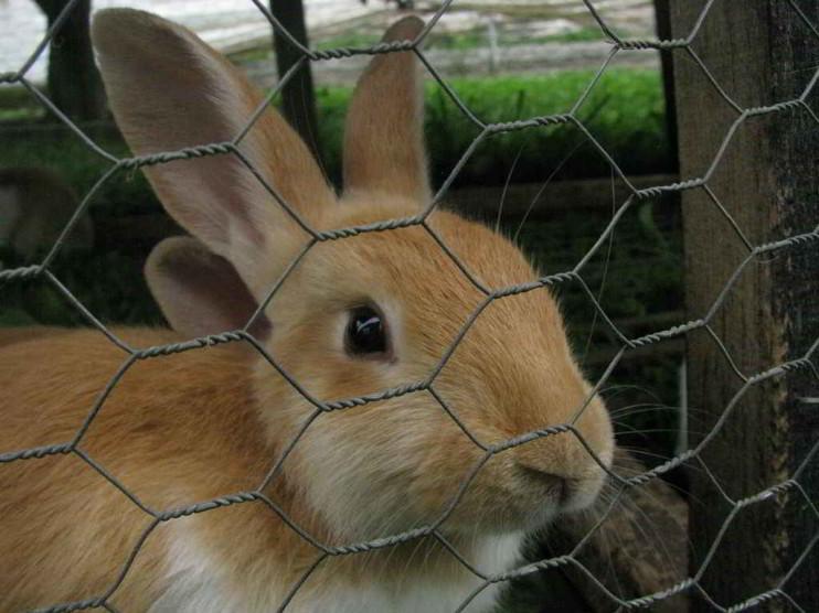 Cría de conejos, alternativa económica en las PyMEs agrícolas. Valle del Cauca, Colombia