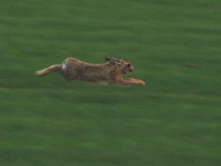Servicio al cliente: cuando el conejo corre detrás del cazador