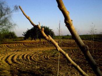 Efectos socioeconómicos de la sequía en Cuba