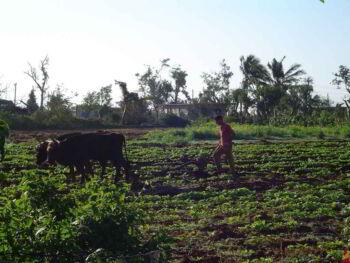 Sistema de gestión de la calidad para Pymes del sector lechero en Cuba