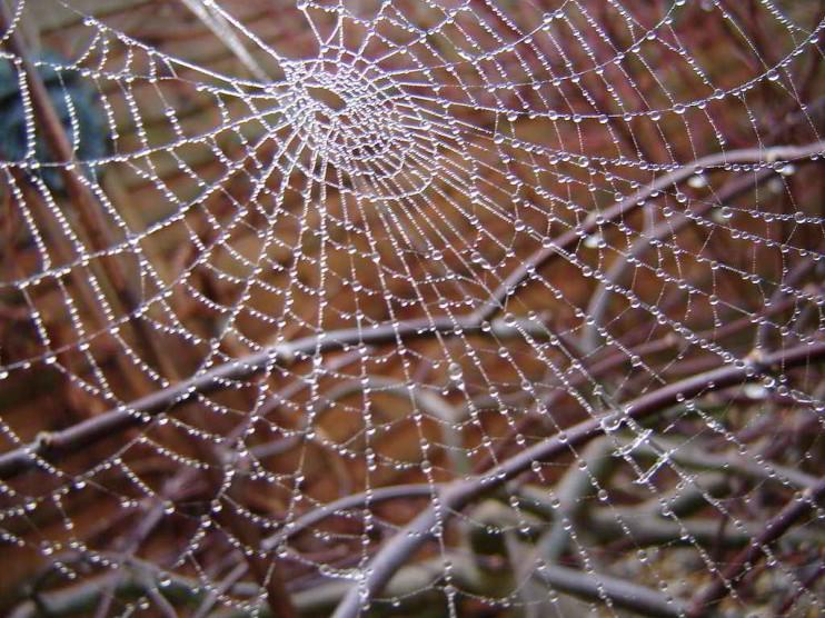 Competitividad inteligente: reforzar la red estratégica del negocio