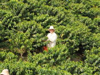 Sistema Nacional Ambiental en la región del Eje Cafetero Colombia