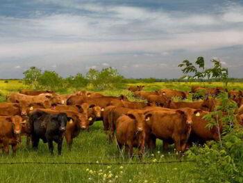 Administración y control de empresas agropecuarias. Libro