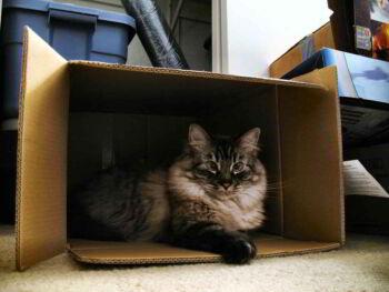 El proceso de selección y el gato de Schrödinger