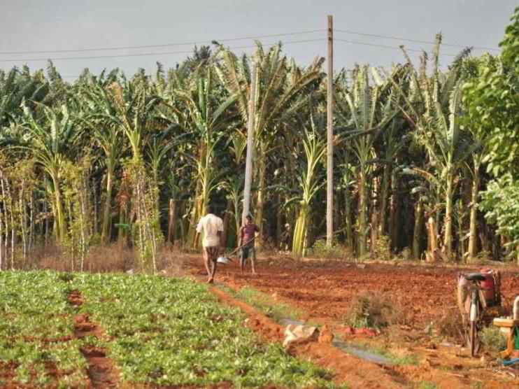 Innovación y análisis empresarial en la UBPC en Cuba