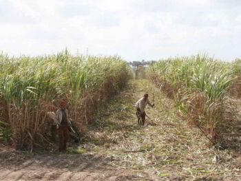Evaluación del impacto de la capacitación laboral en una empresa cubana