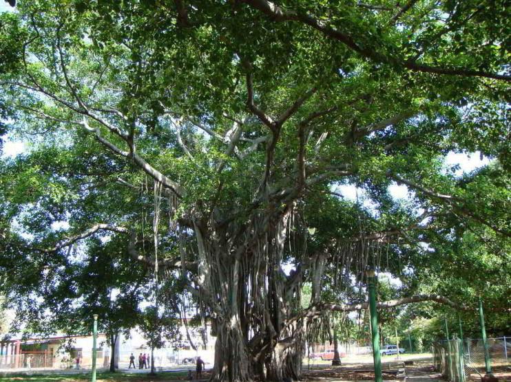 El estudio de la historia local en el Programa de Historia de Cuba de la SUM de Jagüey Grande
