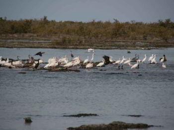 Conocimientos para el turismo sustentable en la península de Zapata Cuba