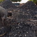 Comercialización de carbón vegetal a partir de desechos en Cuba