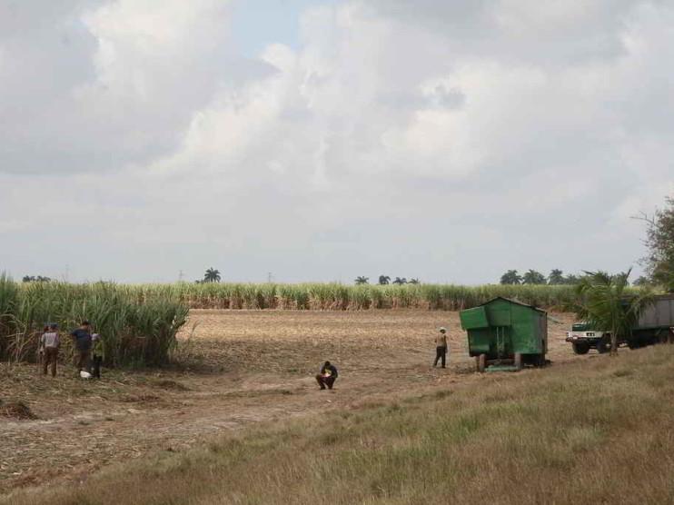Método para determinar las pérdidas en la cosecha cañera