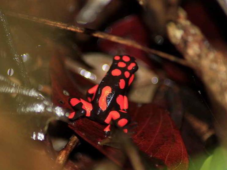 El Chocó biogeográfico un tesoro de la naturaleza