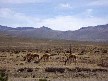 Normatividad Ambiental en el Perú y en el mundo
