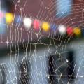 Redes de innovación en teoría de la organización. Un enfoque social