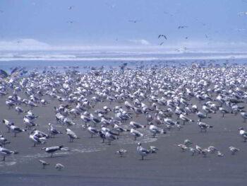 Realidad local de la provincia de Islay en el Perú