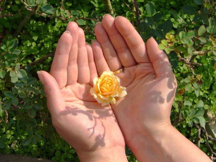 La práctica de la bondad en la vida