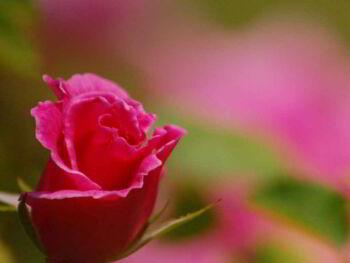 La inteligencia emocional y las competencias emocionales