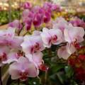 Manufactura esbelta y optimización de la producción en floricultura