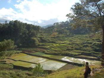Los costos de calidad en la producción agrícola. Caso del arroz en Cuba