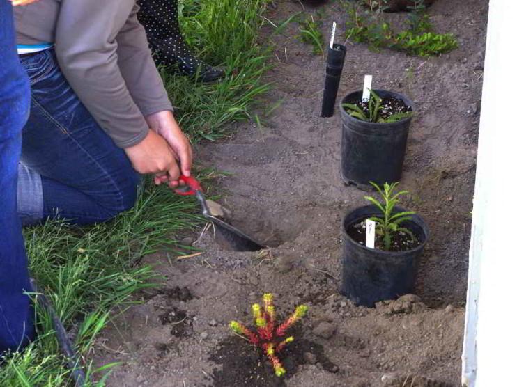 Plan de acción y diagnóstico ambiental de la comunidad Julian Alemán Alpizar en Cuba