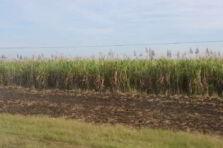 Análisis de factibilidad de un proyecto de reconversión azucarera en Cuba