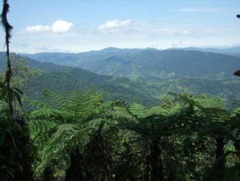 Diagnóstico administrativo de la reserva ecológica Santa Rosa, Santo Domingo de los Tsachilas Ecuador