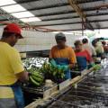 El desarrollo conceptual de un producto turistico basado en el agro ecuatoriano