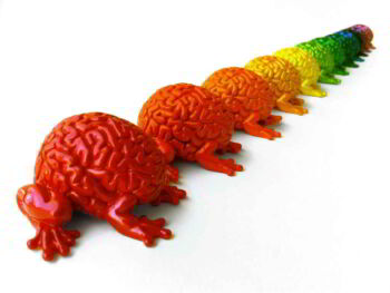 Neuromanagement: gestionar y liderar con el cerebro