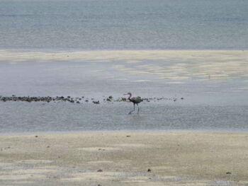 Cómo detectar el potencial de explotación turística de una localidad. Caso Laguna de la Leche, Cuba