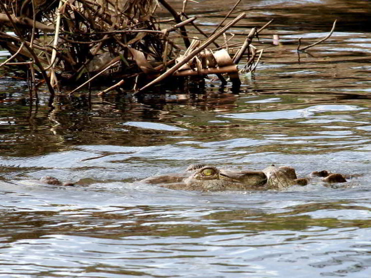 Análisis multicriterio para el manejo del recurso hídrico en un río de Costa Rica.