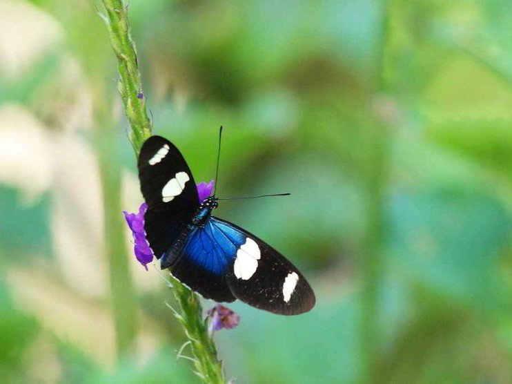 El ecoturismo como alternativa para el desarrollo sostenible, Perú
