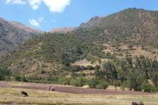 La administración estratégica en la efectividad de las empresas asociativas agropecuarias de la Sierra del Perú (2005-2011)