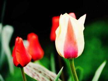 7 signos de falta de inteligencia emocional