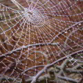 Mejorar la comunicación interna de la empresa mediante una red de facilitadores