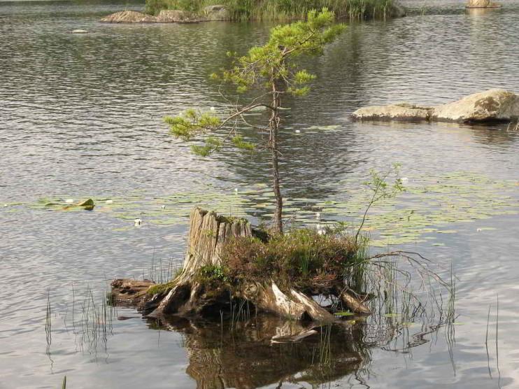 Responsabilidad administrativa ambiental y eficacia de su aplicación en la provincia Las Tunas, Cuba