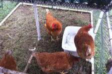 Estudio de prefactibilidad para una granja de gallinas ponedoras en Chiclayo, Perú