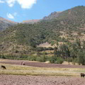 Estudio de prefactibilidad para la siembra del cultivo de la Maca en la provincia de Daniel A Carrión, Perú